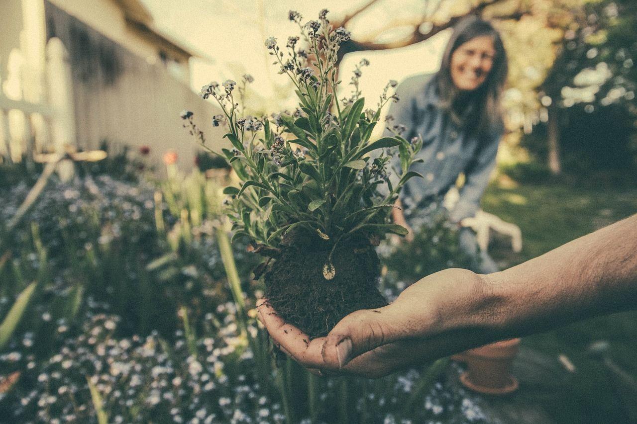 Tradycja strzyżenia krzewów
