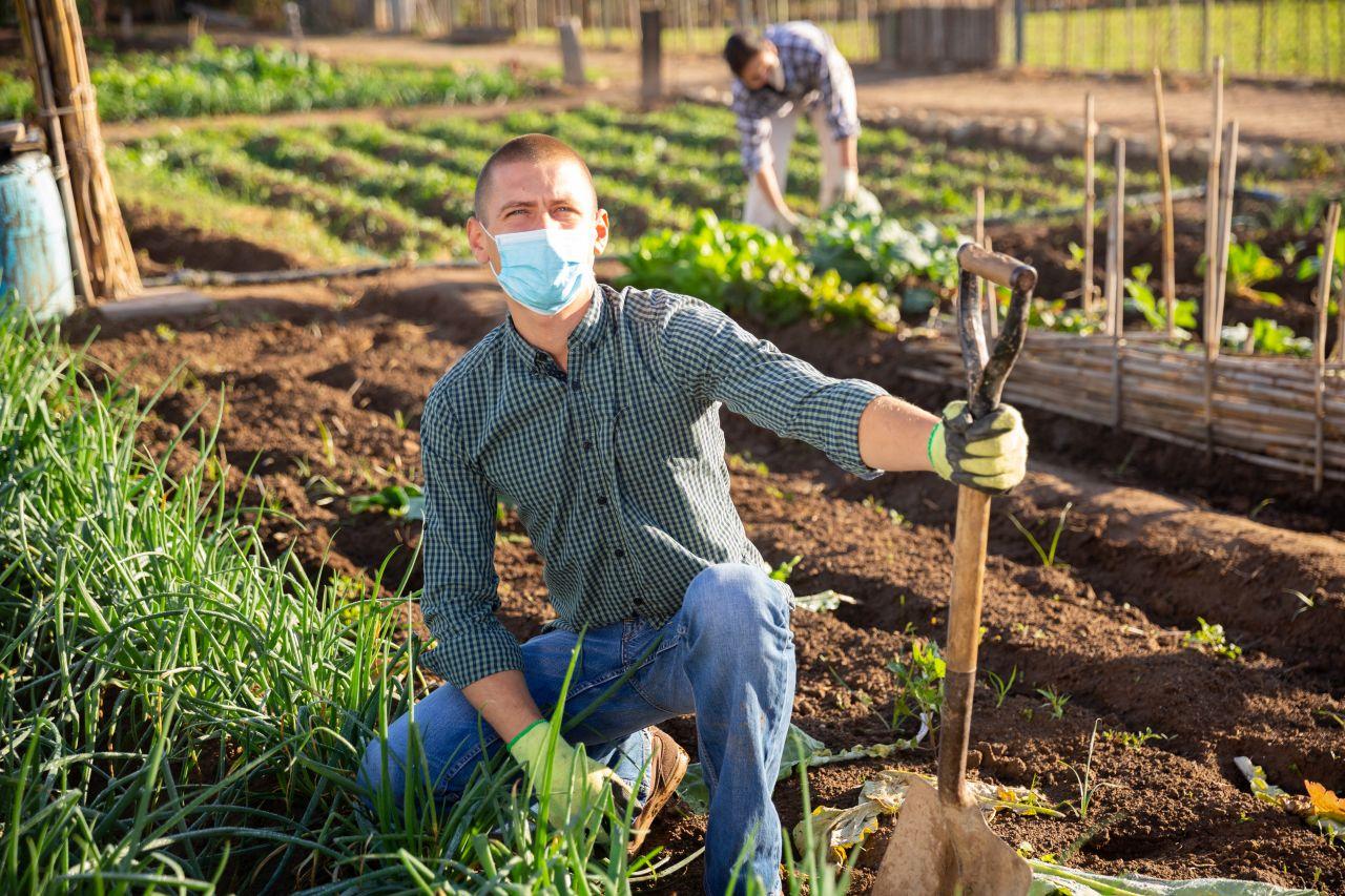 Jak zarządzać produkcją roślinną?