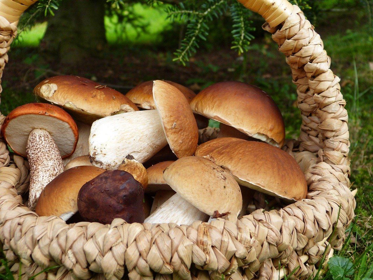 Jak przygotować się do wyprawy na grzyby?