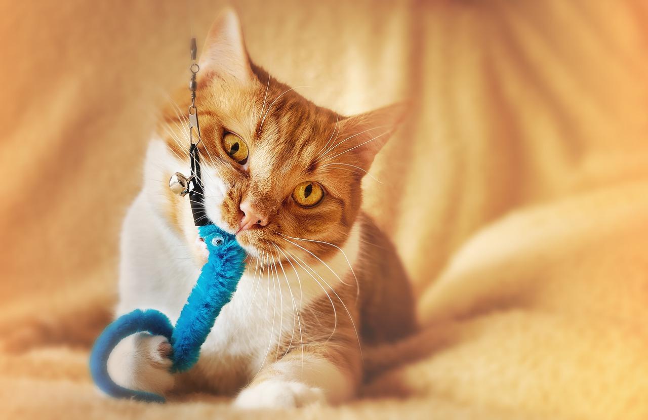 W jakie akcesoria powinien wyposażyć się każdy właściciel kota?